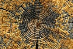 Il ceppo della sezione abbattuta vecchio albero del tronco con gli anelli annuali affetta la struttura di legno immagine stock libera da diritti