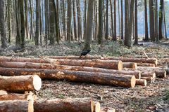 Il ceppo di albero si trova sulla terra fotografia stock libera da diritti