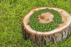Il ceppo di albero sull'erba con ricicla il simbolo Immagine Stock