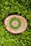 Il ceppo di albero sull'erba con ricicla il simbolo, cima Immagini Stock