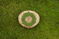 Il ceppo di albero sull'erba con ricicla il simbolo, cima Immagini Stock Libere da Diritti