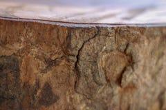 Il ceppo di legno ha affettato fotografia stock