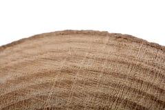 Il ceppo di legno ha tagliato nei pezzi sottili rotondi su fondo bianco Fotografia Stock Libera da Diritti