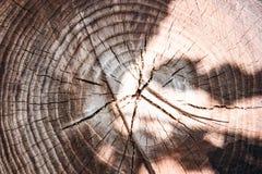 Il ceppo di un albero abbattuto è una sezione del tronco con gli anelli annuali fotografia stock
