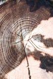 Il ceppo di un albero abbattuto è una sezione del tronco con gli anelli annuali immagini stock
