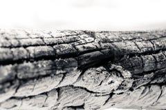 Il ceppo ha bruciato - colpo alto vicino di estremo - B&W Fotografia Stock