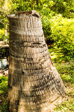 Il ceppo nel giardino Immagini Stock Libere da Diritti