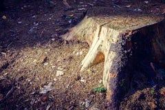 Il ceppo nella foresta su terra è illuminato dal sole immagine stock libera da diritti