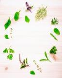 Il cerchio delle erbe fresche dal giardino ha installato su di legno bianco Immagine Stock Libera da Diritti