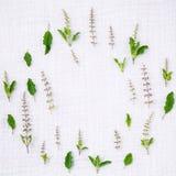 Il cerchio delle foglie sante fresche del basilico ed il basilico santo fioriscono il setu Fotografie Stock