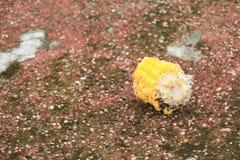 Il cereale è stato rosicchiato con la formica è stato scaricato sul sentiero per pedoni immagine stock