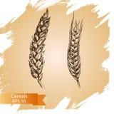 Il cereale disegnato a mano di vettore pota gli schizzi Azienda agricola fresca Immagine Stock