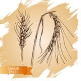 Il cereale disegnato a mano di vettore pota gli schizzi Azienda agricola fresca Immagini Stock Libere da Diritti