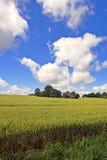 Il cereale file nella primavera fotografia stock libera da diritti