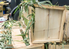 Il cereale ha riempito nelle scatole per il festival dell'alimento della via a Toronto fotografie stock