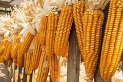 Il cereale secco ha appeso sullo stile tailandese del carretto di legno, Tailandia Fotografia Stock Libera da Diritti