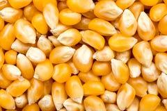 Il cereale semina i dettagli Immagine Stock