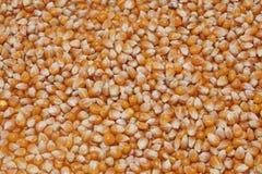 Il cereale semina la struttura - orizzontale Fotografia Stock