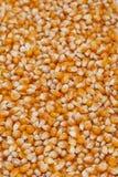 Il cereale semina la struttura - verticale Fotografie Stock