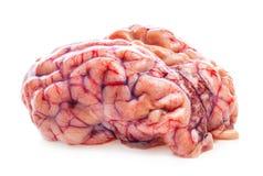 Il cervello della pecora Immagini Stock