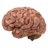 Il cervello umano illustrazione vettoriale