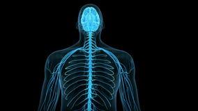 Il cervello umano illustrazione di stock