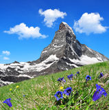 Il Cervino - alpi della pennina, Svizzera Fotografie Stock