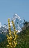 Il Cervino da Zermatt Immagini Stock Libere da Diritti