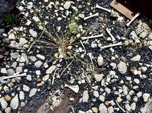 Il cervo sparso disossa accanto ai binari ferroviari Immagini Stock
