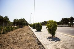 Il cespuglio verde lascia la foresta dell'albero isolata su fondo bianco fotografia stock