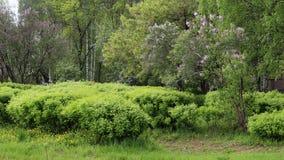 Il cespuglio verde lascia la foresta dell'albero immagine stock libera da diritti