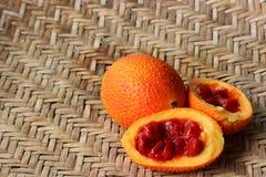 Il cetriolo amaro della molla fresca Fotografia Stock