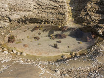 Il chiaro stagno della roccia Immagini Stock