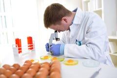 Il chimico che guarda tramite il microscopio per analizza la qualità delle uova Immagine Stock
