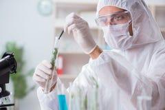 Il chimico dello scienziato di biotecnologia che lavora nel laboratorio fotografia stock