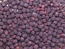 Il chokeberry nero secco fruttifica (aronia melanocarpa) Fotografia Stock Libera da Diritti