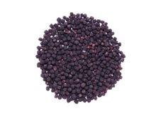 Il chokeberry nero secco fruttifica (aronia melanocarpa) Immagine Stock