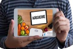 Il CIBO SANO dell'AGRICOLTURA nutriente mangia l'alimento F naturale sana Immagini Stock Libere da Diritti