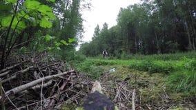 Il ciclista guida vicino nella foresta video d archivio