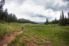 Il ciclista in mountain-bike guida giù la traccia a un solo binario Immagini Stock Libere da Diritti