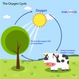 Il ciclo dell'ossigeno Fotografie Stock