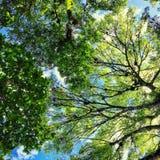 il cielo attraverso la foresta immagini stock libere da diritti