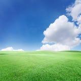Il cielo blu con le nuvole e l'erba Immagine Stock