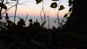 Il cielo blu e cielo rosa/arancio con le foglie Fotografia Stock Libera da Diritti