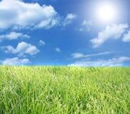 Il cielo blu e l'erba verde. Immagini Stock