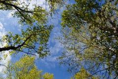 Il cielo con le nuvole attraverso il fogliame verde fotografia stock