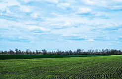 Il cielo con si rannuvola il campo verde Immagine Stock