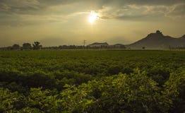 Il cielo dell'agricoltore! Fotografia Stock Libera da Diritti