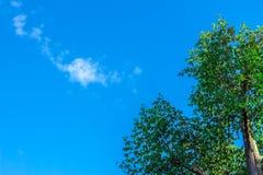 Il cielo e gli alberi del fondo Fotografia Stock