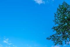 Il cielo e gli alberi del fondo Fotografie Stock